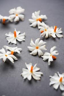 Nyctanthes arbor-tristis или parijat или цветок праджакт, который обычно встречается в индии, азии.