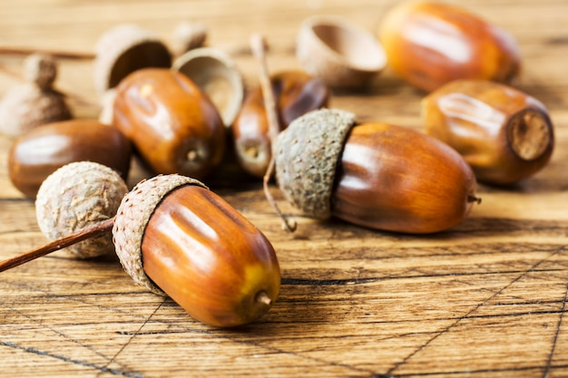 Oak acorns on wooden rustic surface.