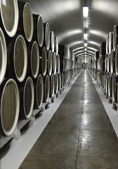 Oak barrels lie in rows in the wine cellar, storage and aging of wine
