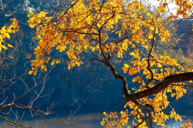Дубовая ветка с яркими осенними листьями на фоне солнца