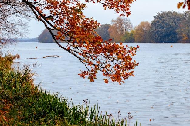 乾燥した紅葉が川にぶら下がっているオークの枝、秋の景色