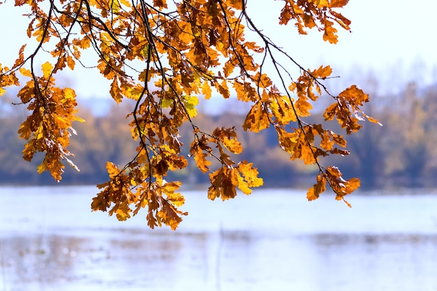 Oak branch with dry brown leaves on river background in sunny weather