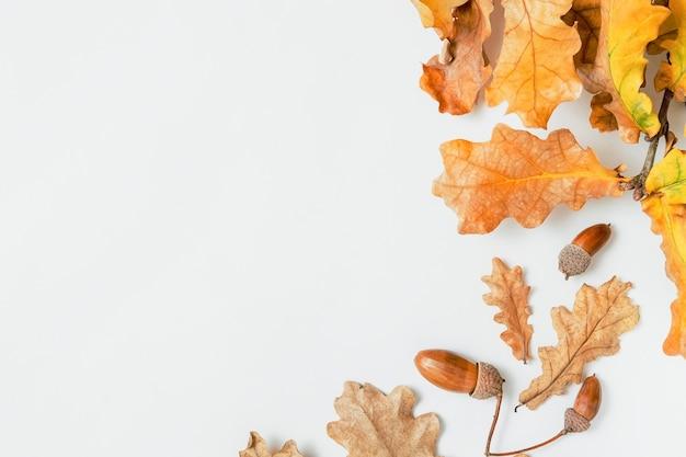 白い背景、秋のコンセプト、テキストのフレーム、コピースペースにオークの葉とオークの枝。装飾的なオークの枝の要素。
