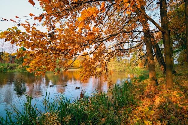 Дубовые ветви в солнечном свете на озере осенью.