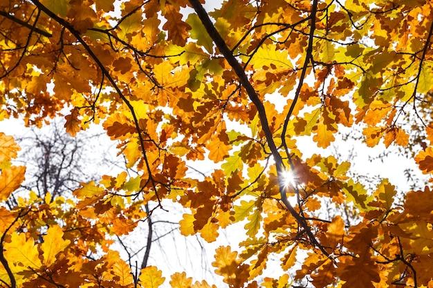 都市公園のオレンジの葉とオークの枝自然の背景と太陽光線