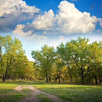 Oak forest in autumn