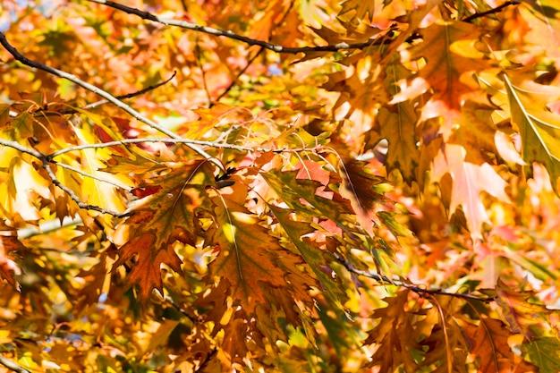 オークの葉