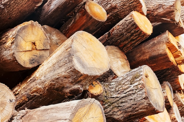 Oak logs are stacked in a pile, at an angle, in cross section and length. logging