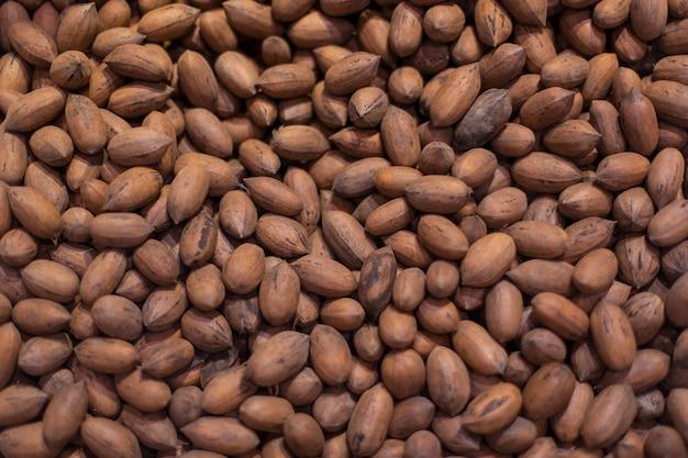 Oak tree cones in the grocery stock