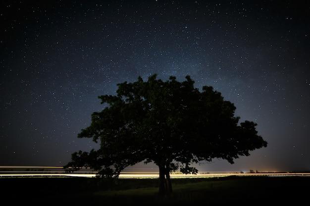 밤하늘과 은하수의 배경에 녹색 잎이 있는 떡갈나무.