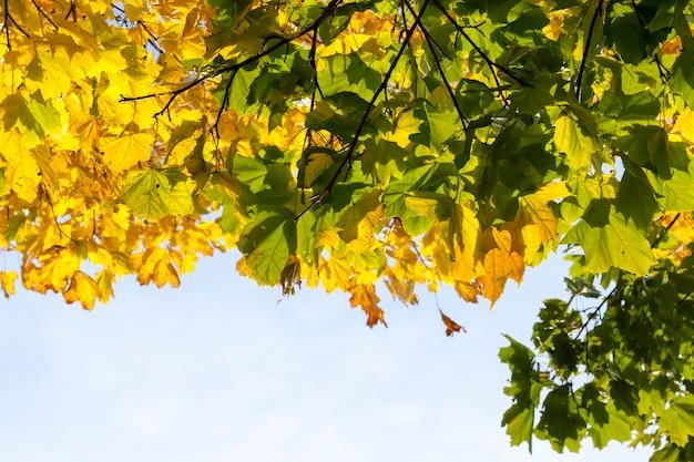 樫の木の風景