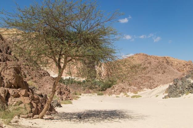 사막, 붉은 산, 바위와 푸른 하늘에 오아시스. 이집트, 시나이 반도.