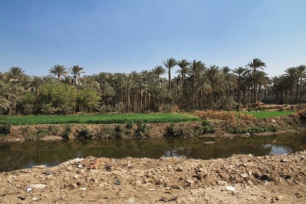Oasis in memphis of egypt desert