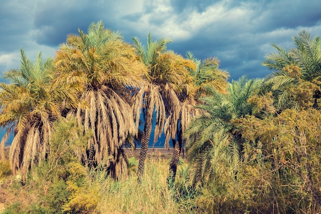 Oasis in negev desert in stormy weather. israel