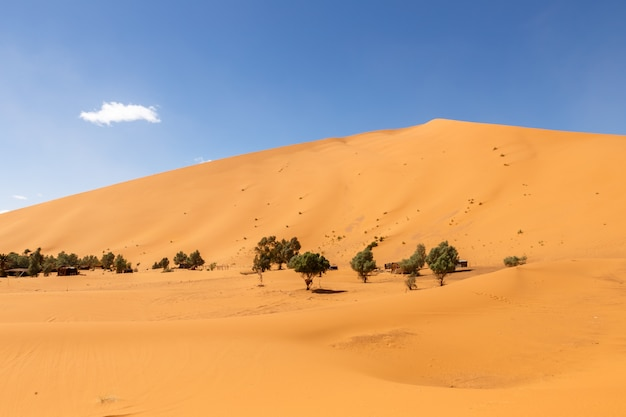 Oasis in the sahara desert, erg shebbi dunes