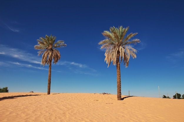 An oasis in the sahara desert in the heart of africa