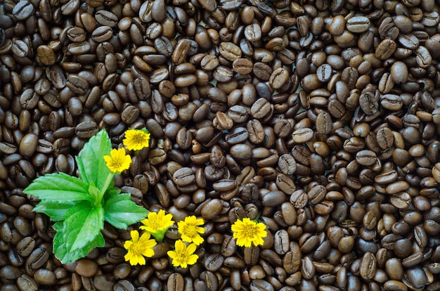 Oasted coffee beans background and yellow flower