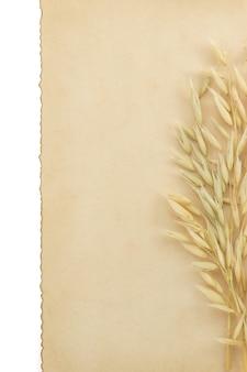 白い表面に分離されたエンバクの耳と羊皮紙