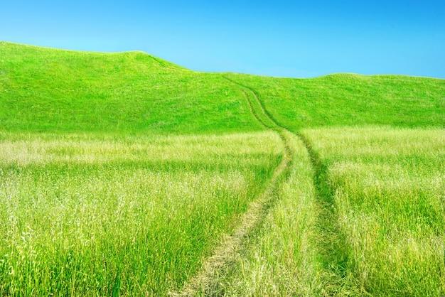 맑고 푸른 하늘을 배경으로 오르막으로 가는 타이어 트랙이 있는 귀리 밭