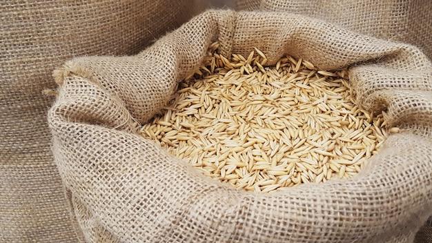 삼 베 자루에 귀리 곡물 클로즈업. 맥아 또는 밀 곡물. 음식과 농업 개념