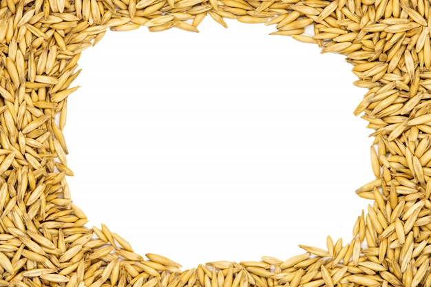 Oat seeds with copy space for design