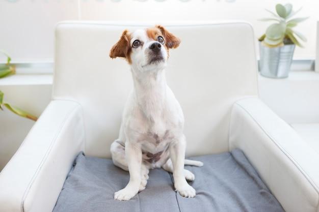 待合室で従順な犬