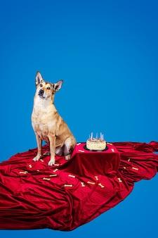 Послушная собака сидит на красной ткани возле именинного торта со свечами и костями