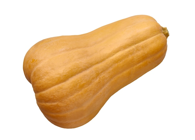 Oblong butternut pumpkin isolated on a white background