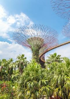 ガーデンズバイザベイのシンガポールの中心にある未来的なスーパーツリー。トップブリッジocbc