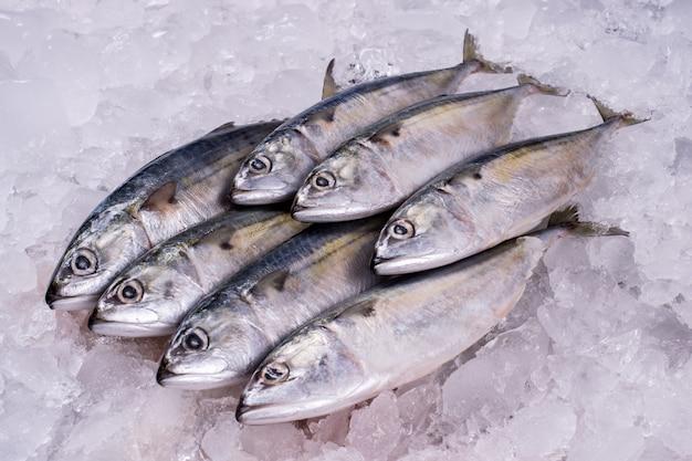 Ocean fish fresh frozen raw