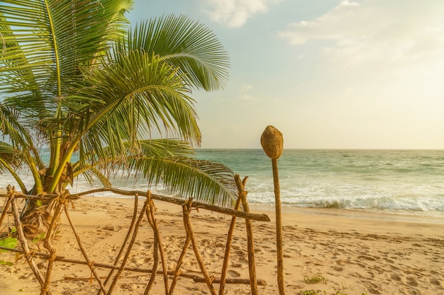 코코넛 야자수와 바다 모래 해변 풍경보기