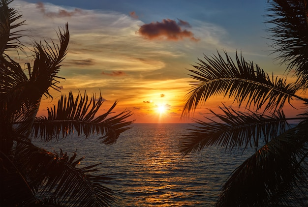 Ocean sunset visible through palm leaves