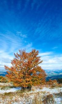 Октябрьское карпатское горное плато с первым зимним снегом и осенней красочной листвой