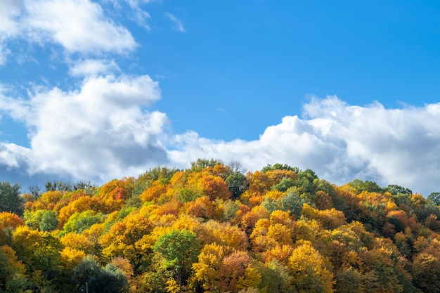 October golden landscape in europe. autumn outdoor. top of yellow, red and green trees, and blue sky with scenic white clouds.