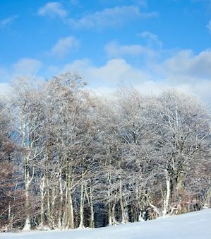 Октябрьская опушка букового леса и первый зимний снег. два кадра сшивают изображение.
