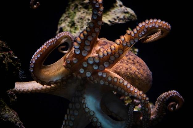 Осьминог, плавающий под водой в океане