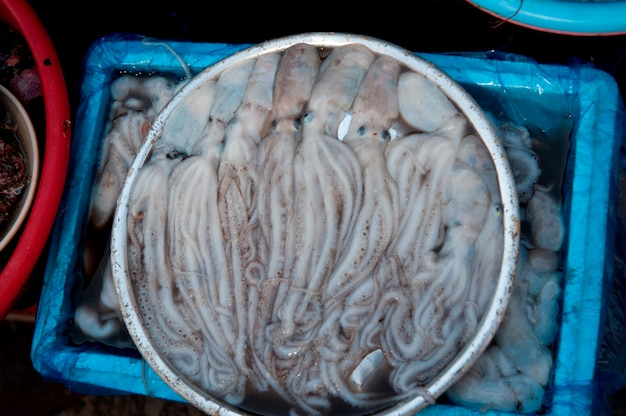 Octopuses at a fish market, busan, yeongnam, south korea
