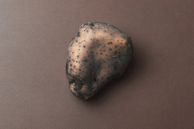 The odd, large, organic ugly mutant jagged potato with insect bites went bad