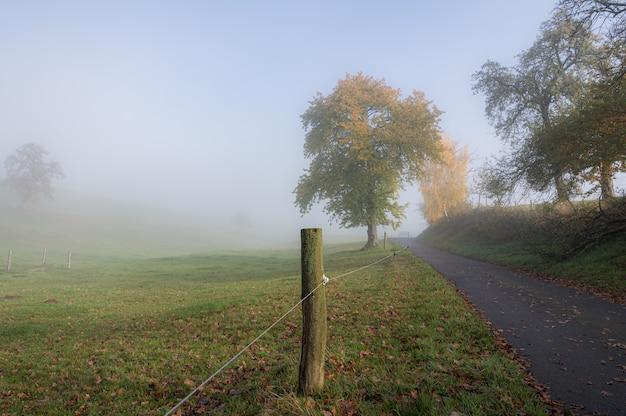 霧のかかった朝のオーデンヴァルト