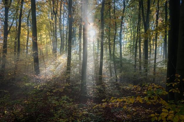 霧の朝のオーデンヴァルト