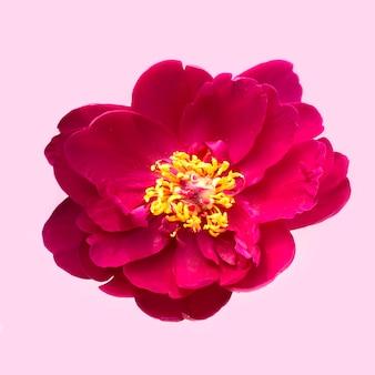 분홍색에 빨간 꽃의