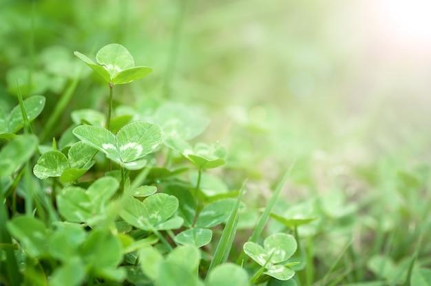 緑豊かな草の