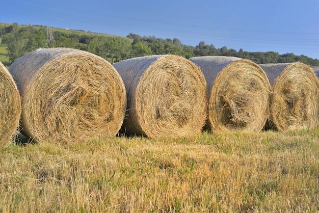 フィールドのラインで干し草のof
