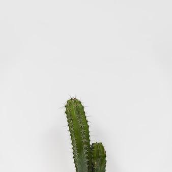 Office cactus
