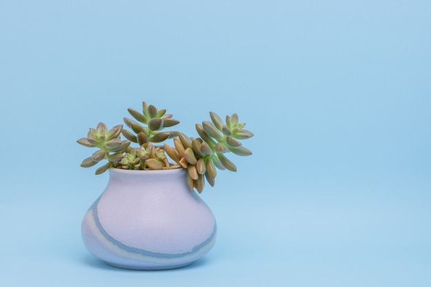 Office decoration: fresh succulent plant isolated on light blue background