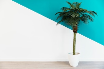 Office palm in front of wall