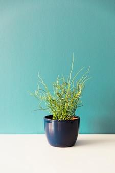 Office plant in flowerpot