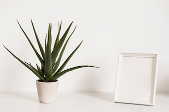 Office plant next to frame