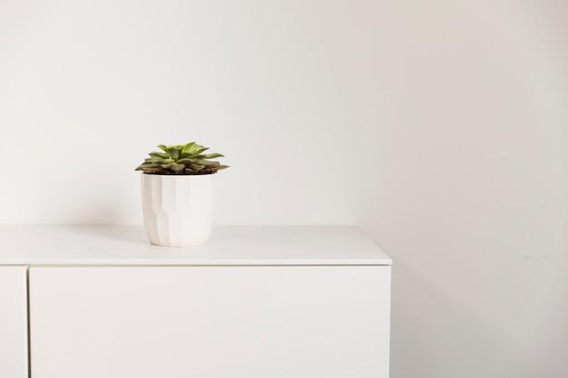 Офисное растение на шкафу