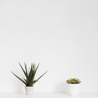 Office plants in flowerpot